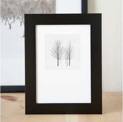 6 trees framed