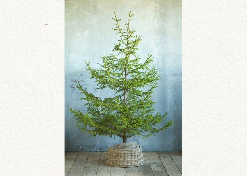 SEAS-TREE-61-001001-alt01-s-l