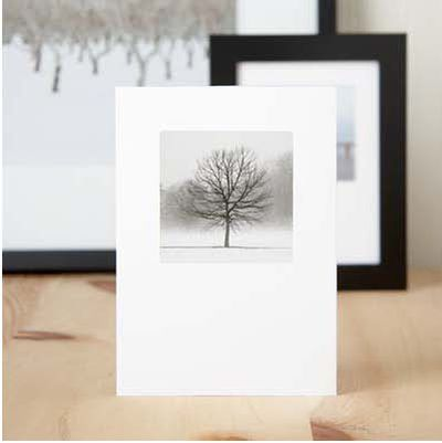 One tree framed